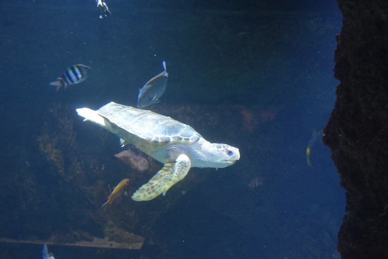 La Rochelle - aquarium_6