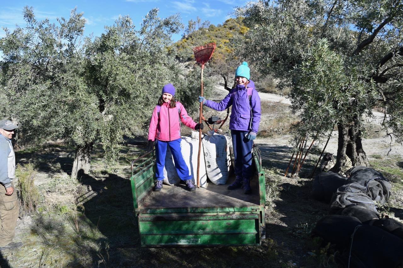 Beas de Granada - olive harvesting, riding in tractor