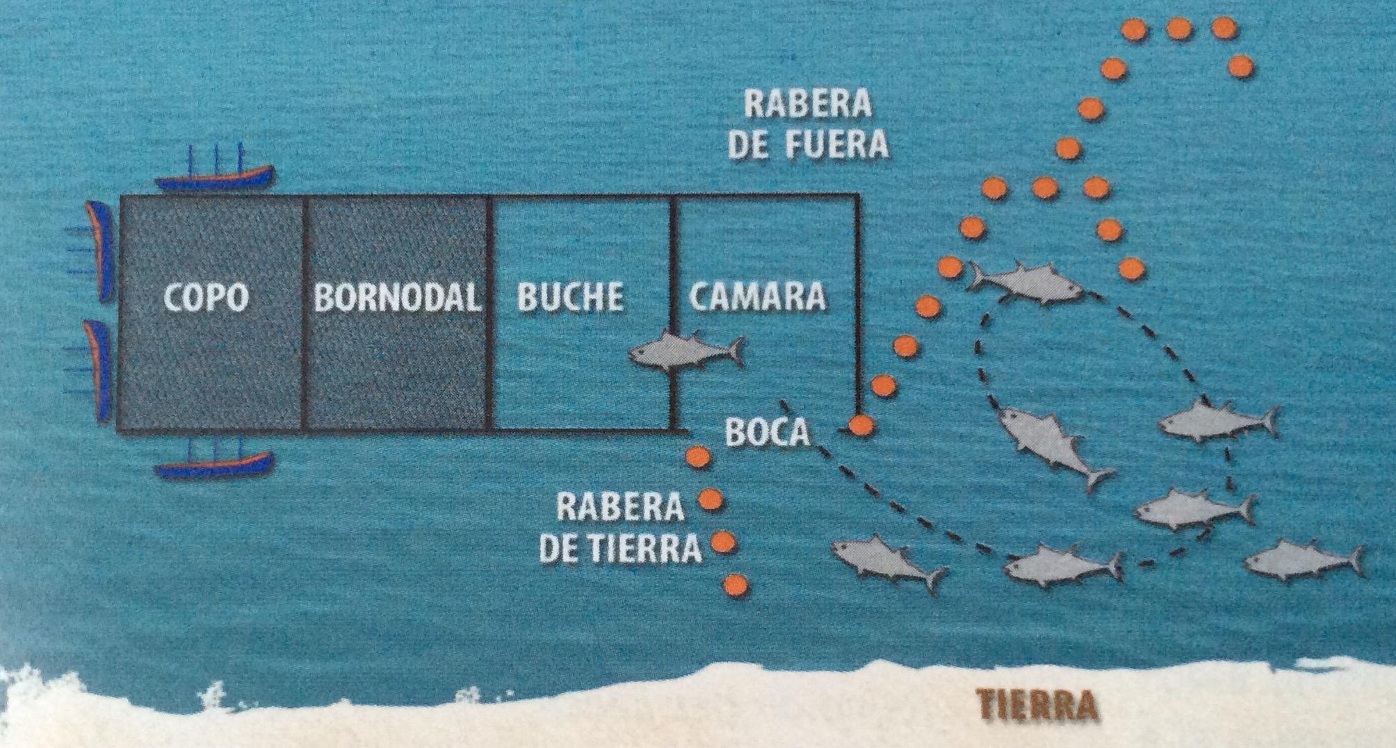 Straits of Gibraltar - Almadraba