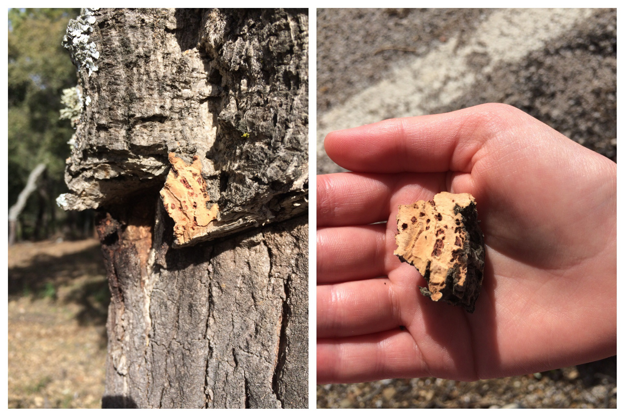 Cimbarra waterfall cork trees bark