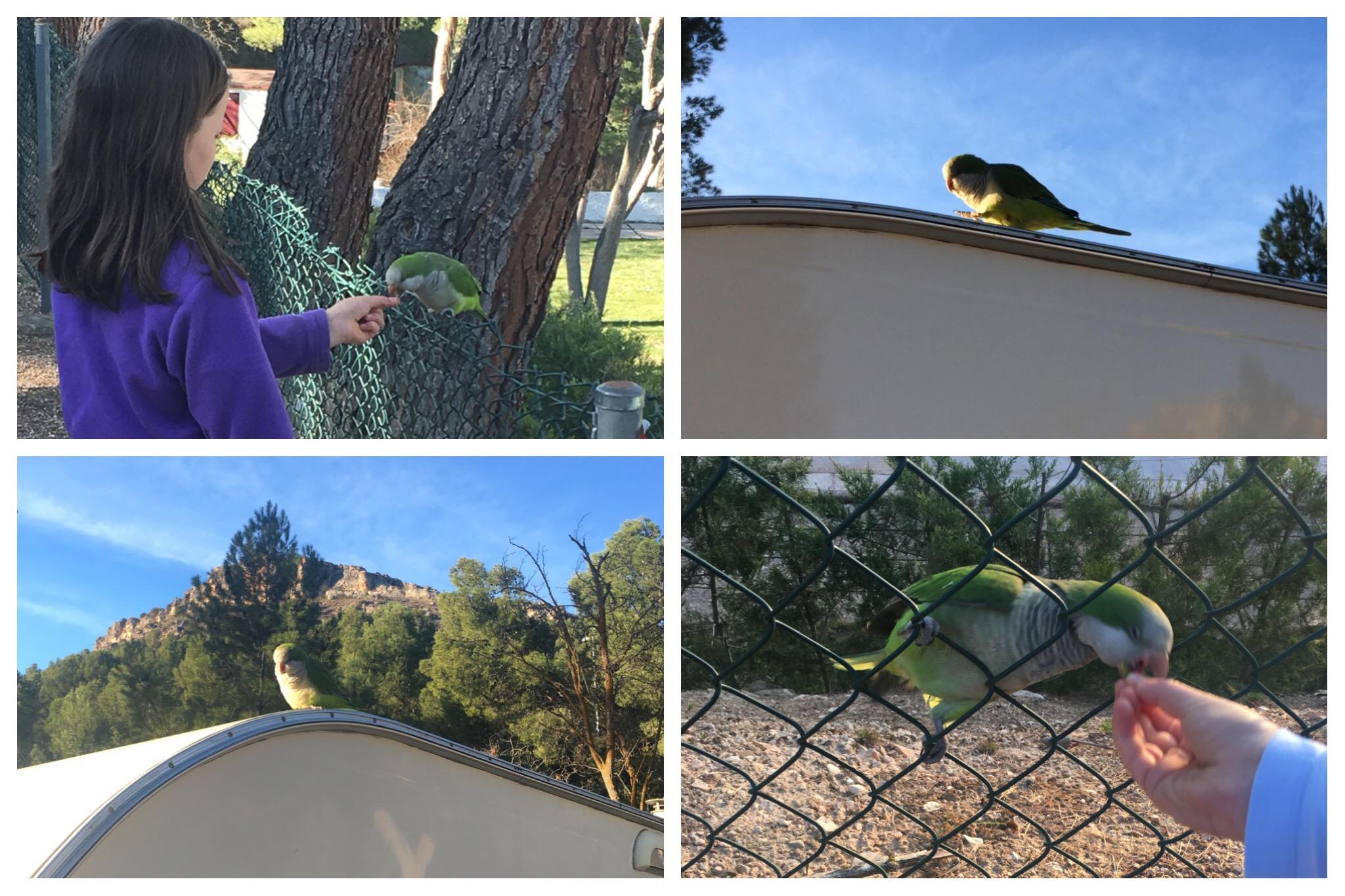 Nuevalos Lago Resort camping parakeet