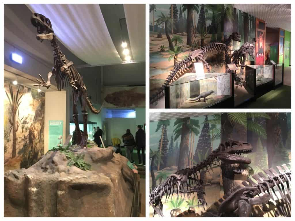Replica dinosaur skeletons at the World Museum Liverpool